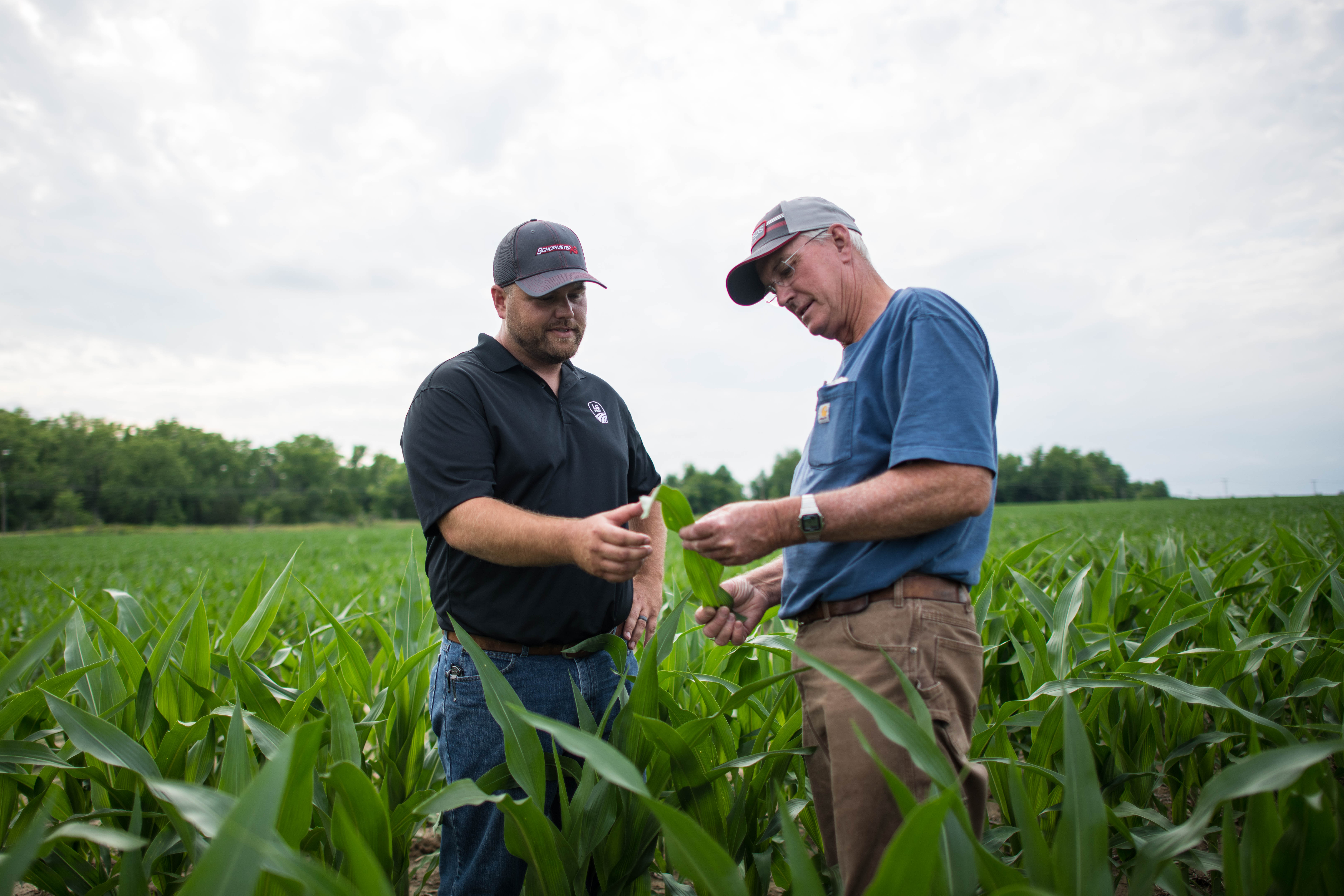 Agronomist and customer looking at corn in a field