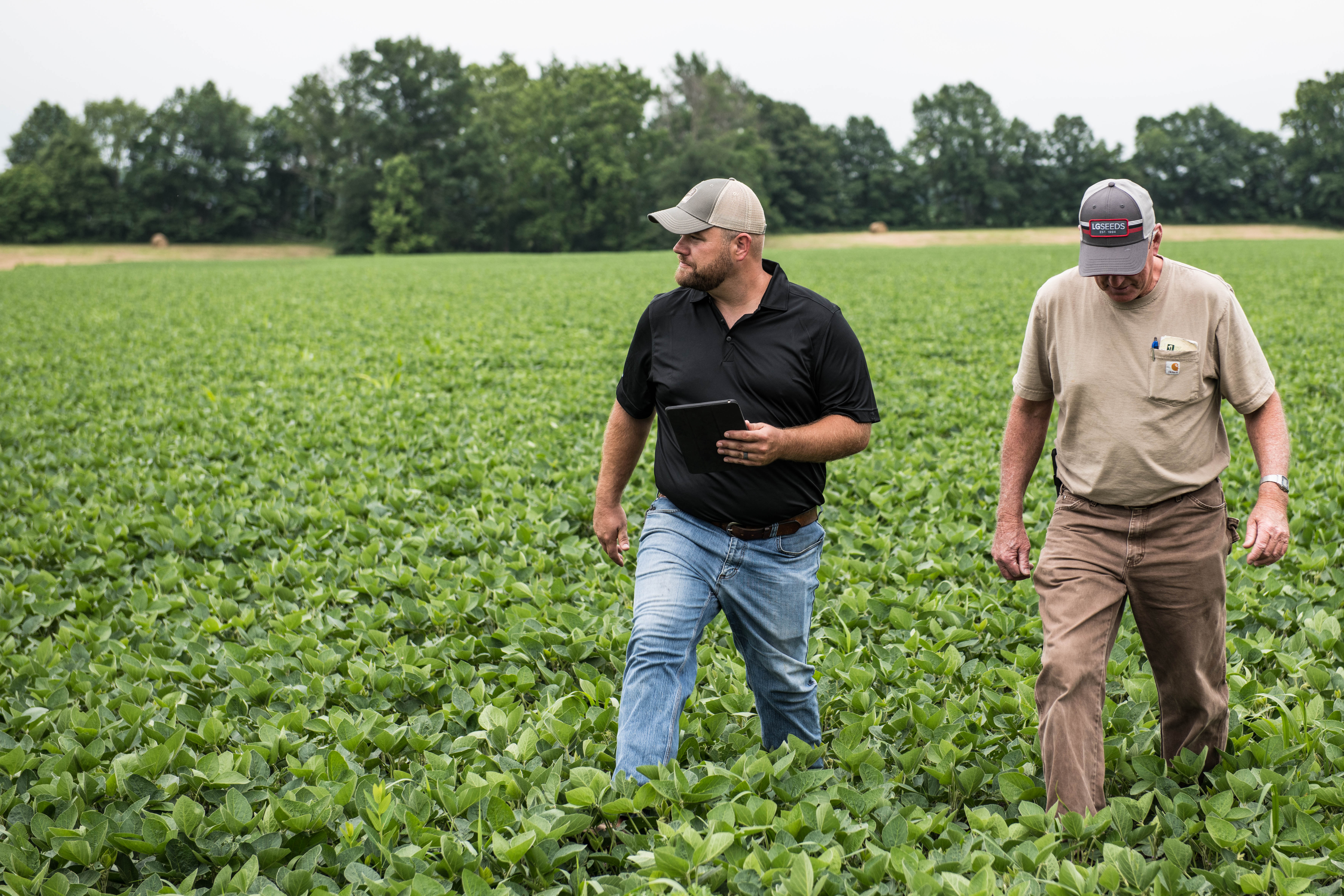 Two farmers in soybean field