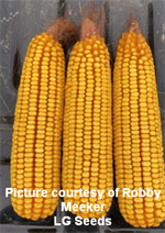 Meeker Corn 1 Cited