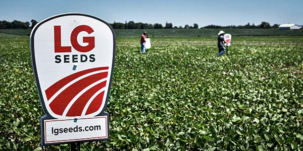 soybeans_dicamba