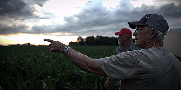 scouting corn fields