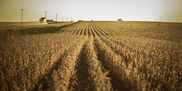 soybean launch_600x300